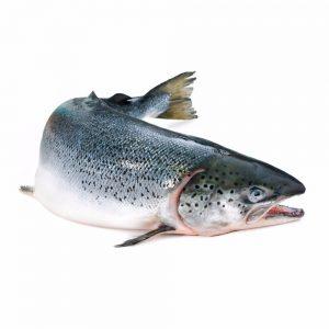 Cá hồi Nauy Organic