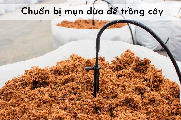 Chuẩn bị mụn dừa để làm đất hữu cơ trồng cây