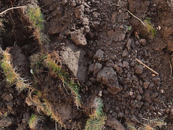 đất hữu cơ và đất thường