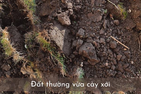 đất thường vừa cày đất hữu cơ trồng cây