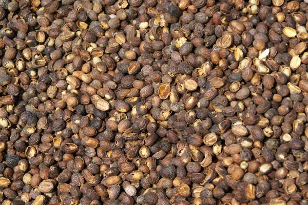 vỏ hạt cà phê trồng hoa, trồng cây cảnh