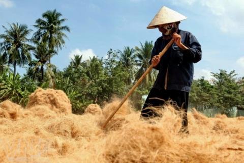 Mụn Dừa Bến Tre
