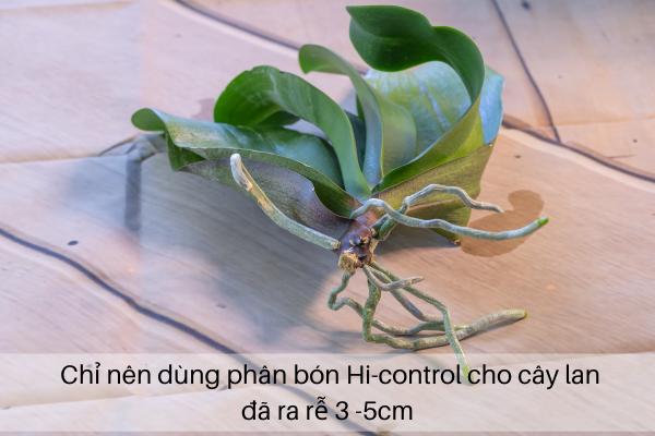 Chỉ nên dùng phân bón Hi-control cho cây lan đã ra rễ 3 - 5cm