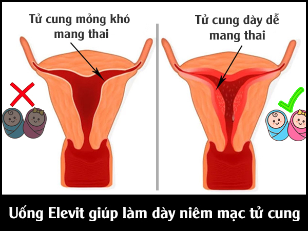 Uống Elevit - Vitamin E làm dày niêm mạc tử cung