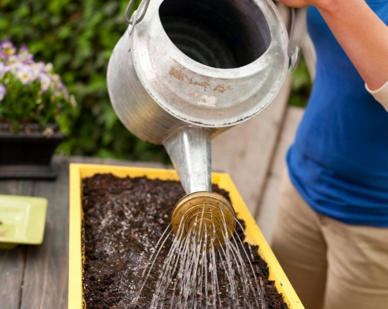 chăm sóc cây ươm
