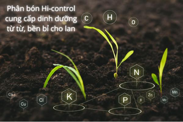 Phân bón Hi-control cung cấp chất dinh dưỡng từ từ, bền bỉ cho lan