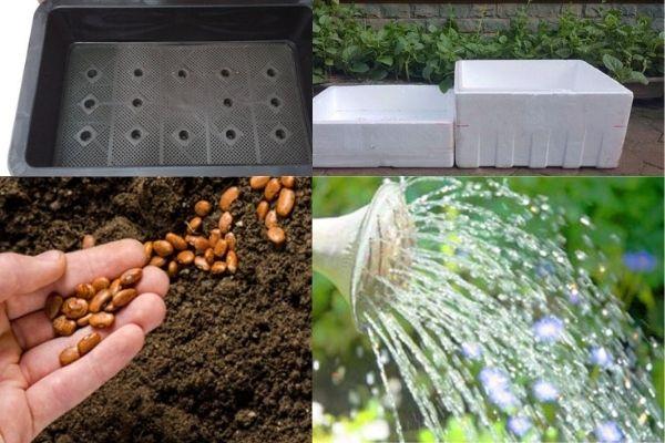 ươm cây trồng bằng giá thể