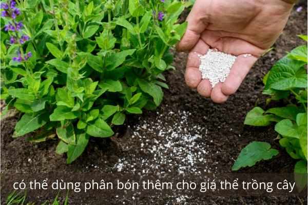 dùng phân bón thêm cho giá thể trồng cây
