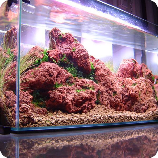 Hồ thủy sinh làm từ đá lava