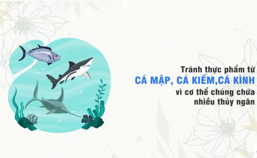 nên tránh các loại cá có hàm lượng thủy ngân cao khi đang chuẩn bị mang thai, đang mang thai và cho con bú.