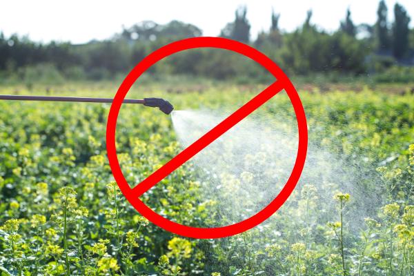 thuốc trừ sâu hóa học làm vườn