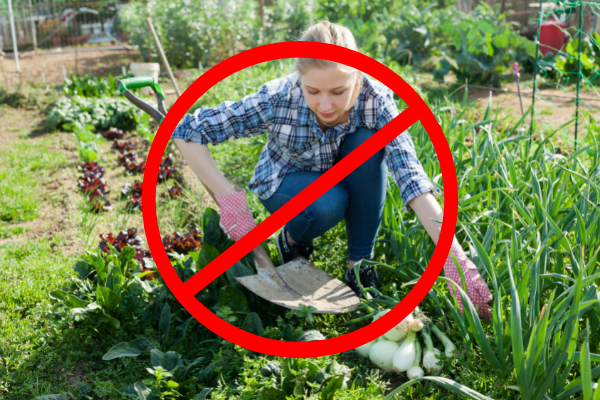 dụng cụ làm vườn phù hợp