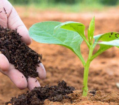 Lựa chọn phân bón hữu cơ giúp cây phát triển tốt và an toàn cho môi trường