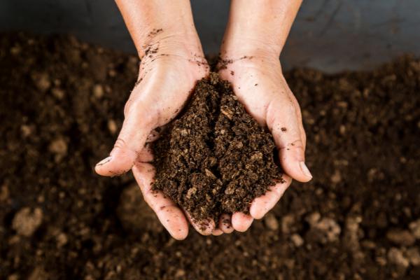 Đất trồng rất quan trọng cho sự phát triển của cây rau