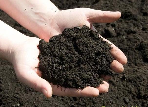 Những lợi ích khi trồng đất hữu cơ
