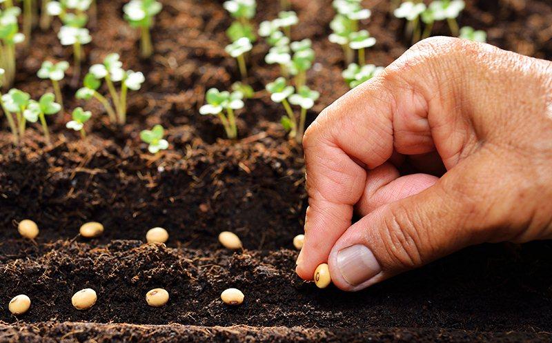 Hạt giống cây trồng đảm bảo giúp cây phát triển tốt hơn và đạt năng xuất cao hơn.