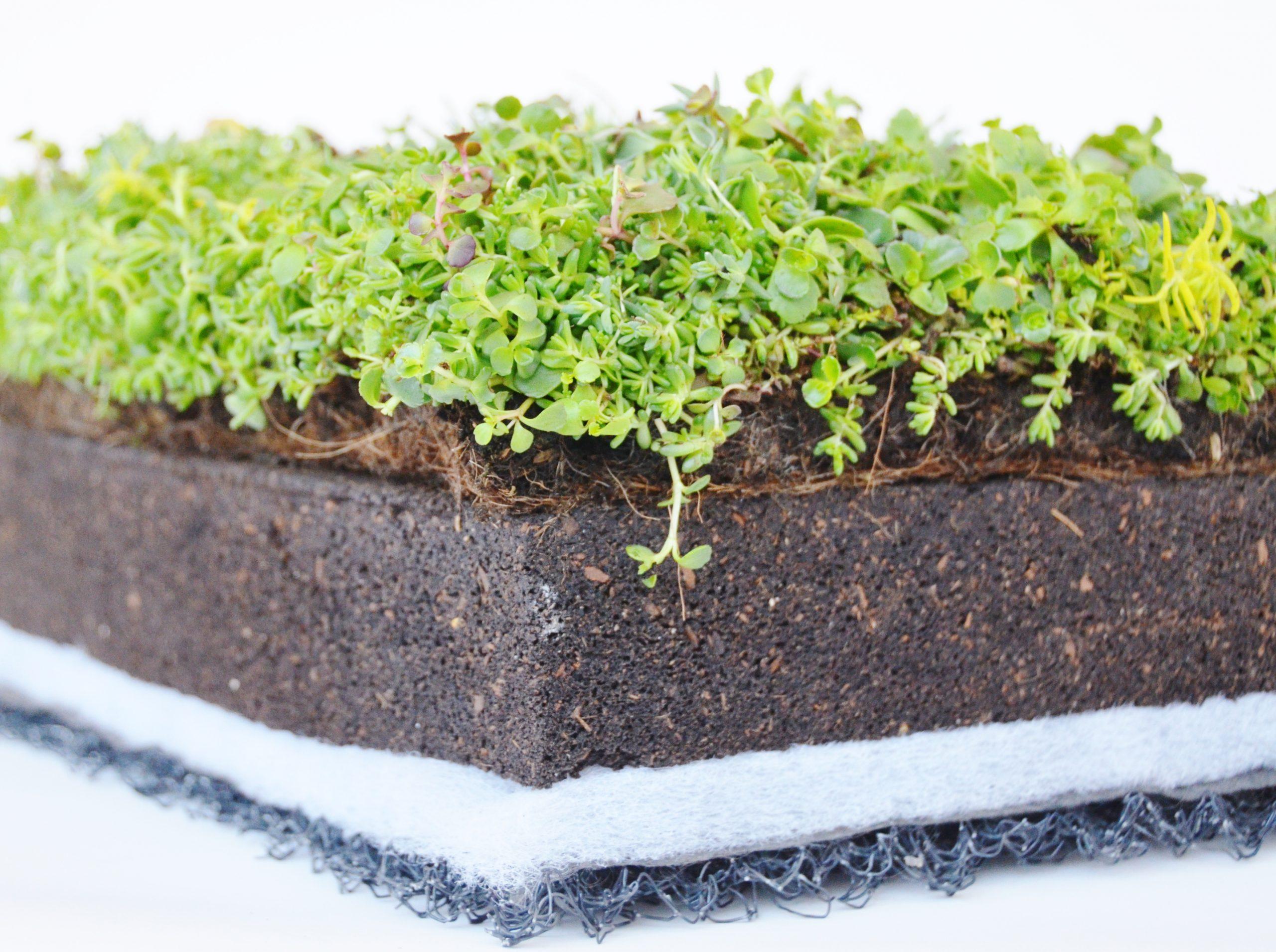 Lợi ích của việc trồng cây bằng giá thể